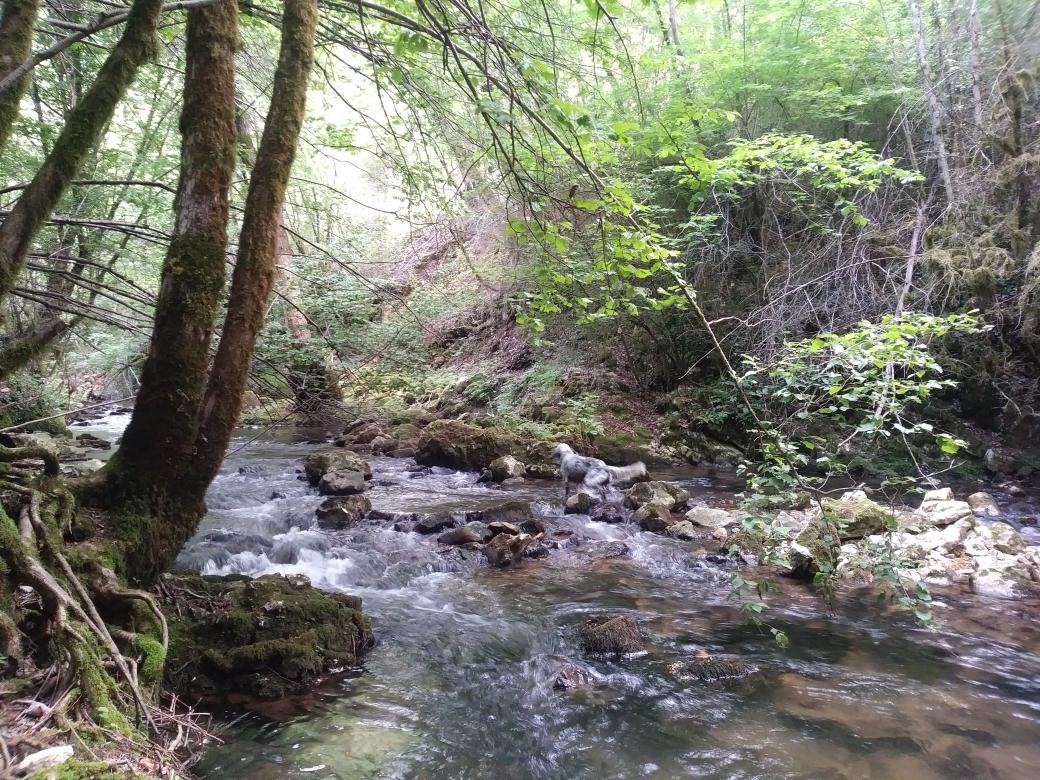 """Progetto """"Valutazione della qualità degli ambienti fluviali - Fiume Aniene"""""""